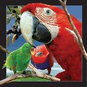Pocztówka 3D Papuga