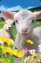 Mini kartka 3D Owca