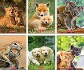 Zeszyt A5/16K linia podwójna Animals (10szt)
