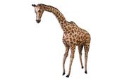 Żyrafa gigant 66cm 21544