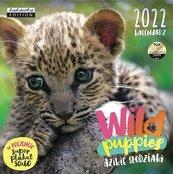 Kalendarz 2022 ścienny Classic Wild puppies