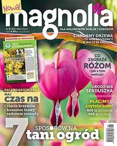 Magnolia 5/2017
