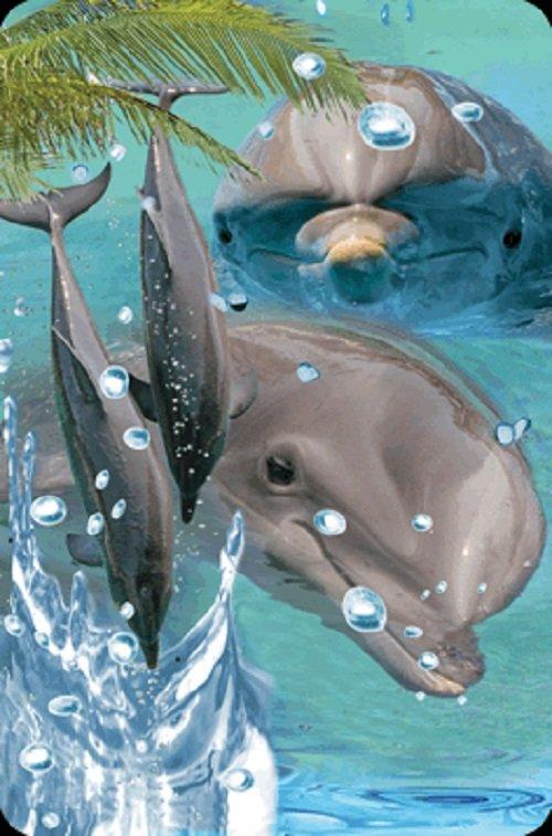 Minikartka 3D - Delfin