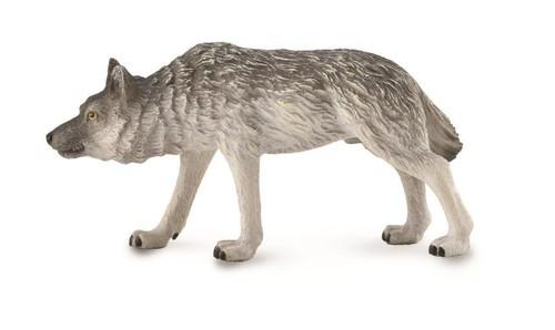 Wilk polujący