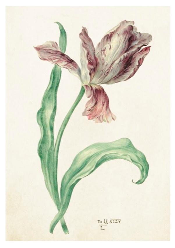 Karnet ST349 B6 + koperta Tulipan