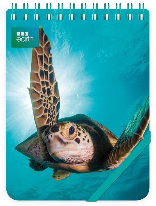 Kołonotes ozdobny Green Turtle