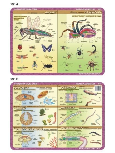 Podkładka edu. 052 - Anatomia: owady, pajęczaki..