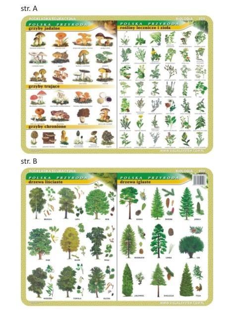 Podkładka edu. 024 - Grzyby, rośliny lecznicze...