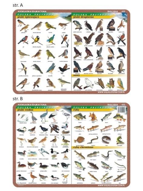 Podkładka edu. 022 - Ptaki wodne, śpiewające...