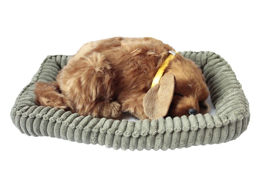 Śpiący pies na poduszce - Golden