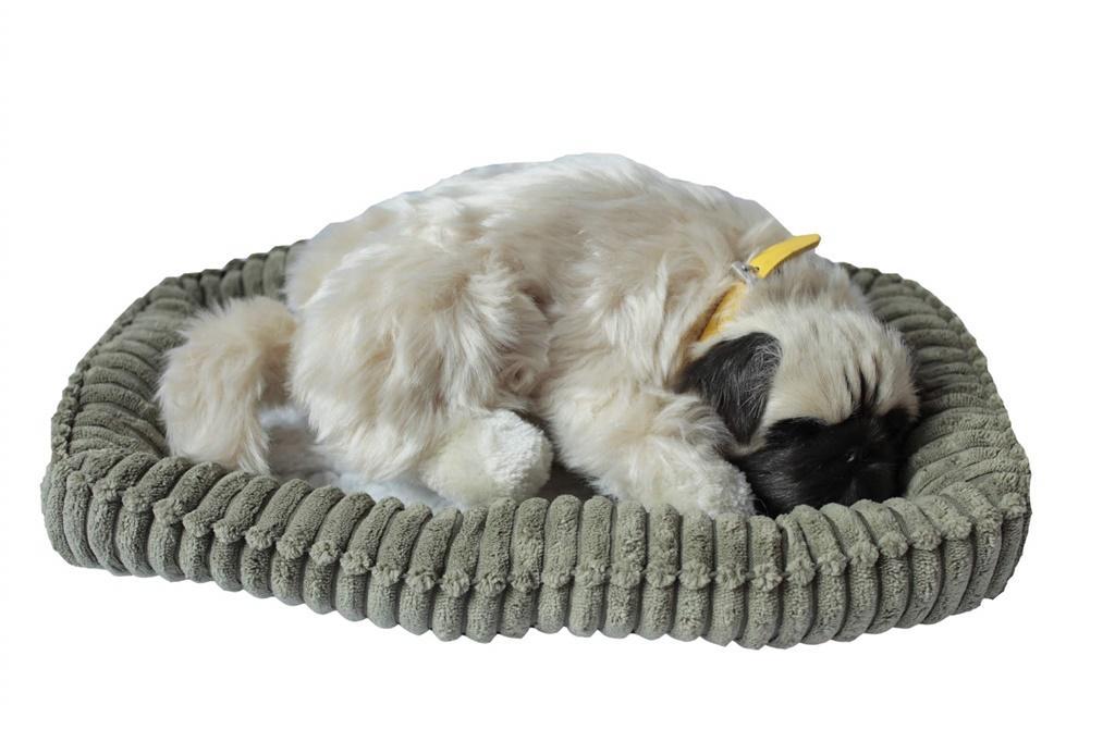 Śpiący pies na poduszce - Mops
