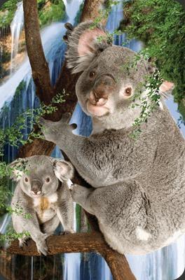 Mini kartka 3D Koala