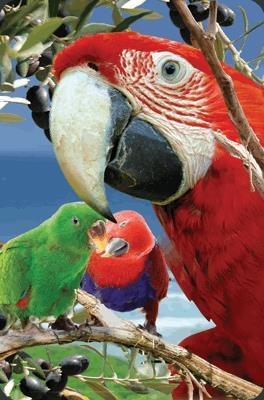 Mini kartka 3D Papuga