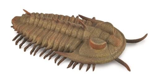 Redlichia Rex Trilobite